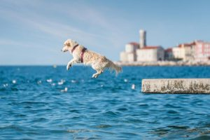 dog diving into water