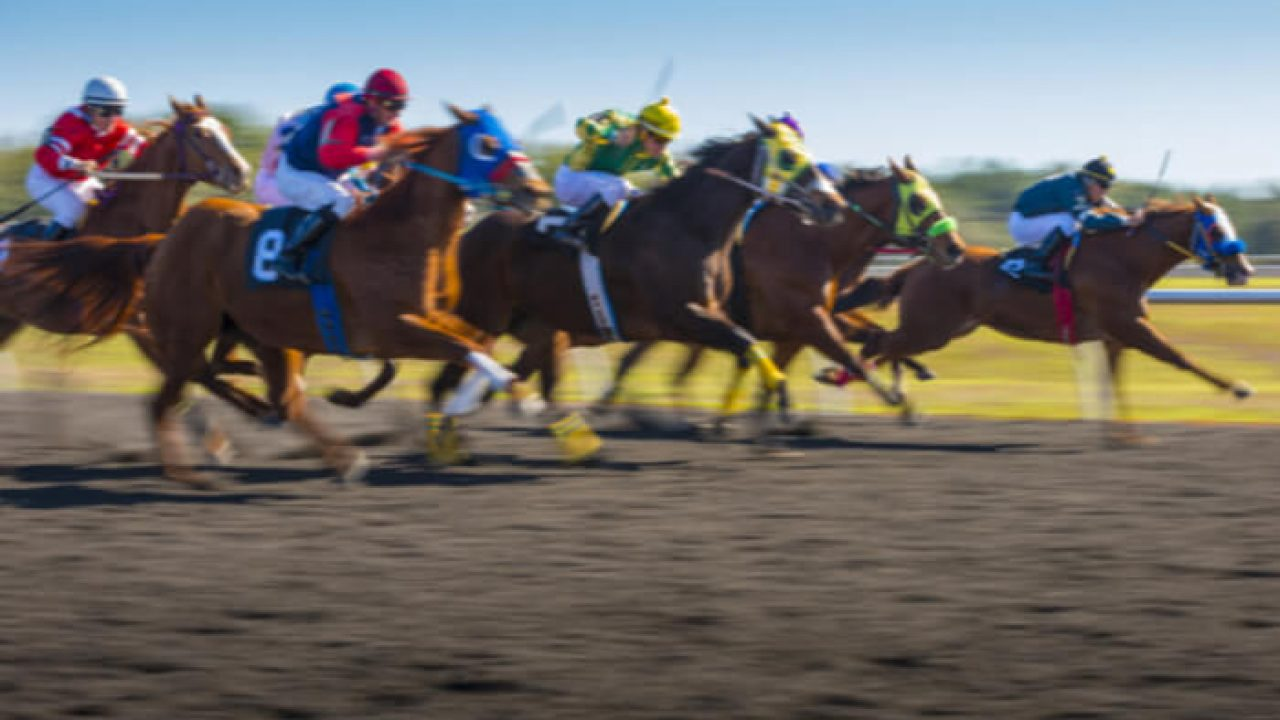 Horse racing betting in new jersey online sports betting usa players in epl